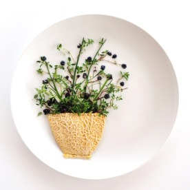 Flower Pot. Cantaloupe Skin - Thyme - Chives - Blueberries - Damsons